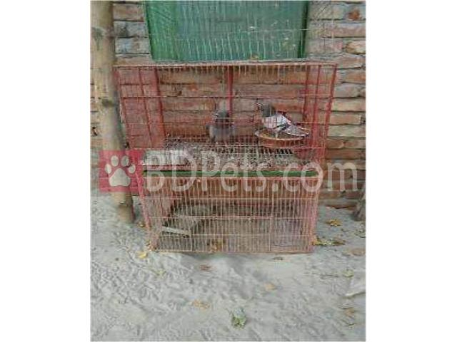 Pigeon cage for sale