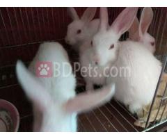 rabbit baby