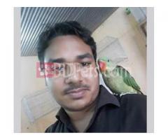 alex parrot