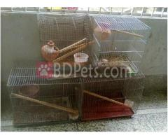 4 pieces Pigeon cage for sale