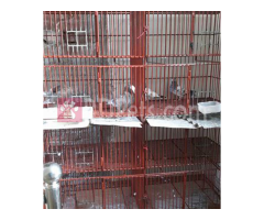 Pigeon cage for sale.