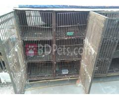 Pigeon cage for sale with 11 trays