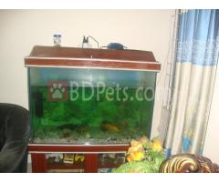 aquarium for sell