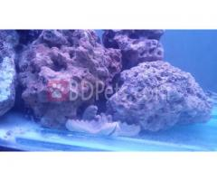 Marine (Salt Water) Aquarium Accesories