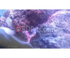 Marine (Salt Water) Aquarium Accesories