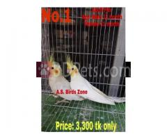 some birds for sell