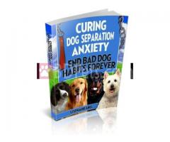 Curing Dog Separation eBook